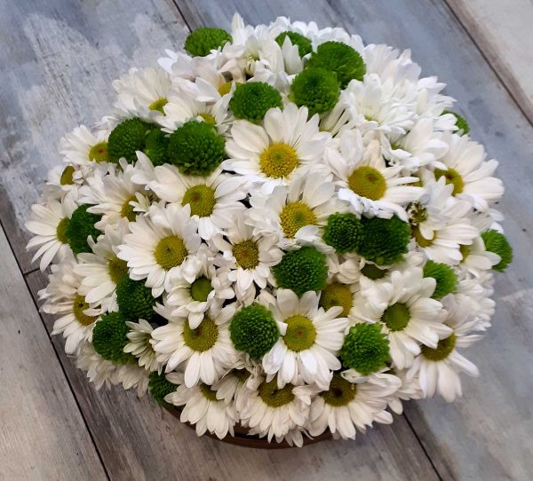 Papatya Kutulu Çiçek