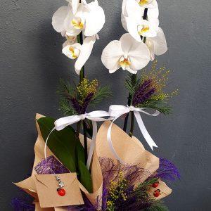 Goncalı Beyaz Orkide