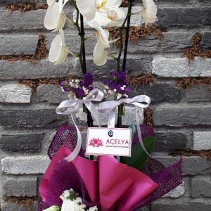 Beyaz Çift Dal Orkide