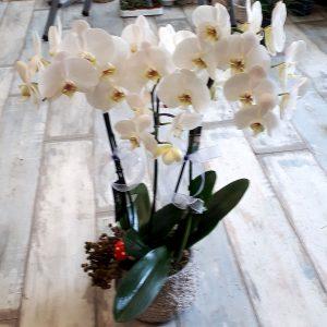 Beton Seramikte 3 Dal Orkide