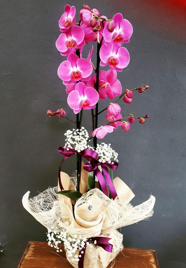 Pembe Çift Dal Orkide