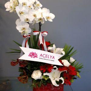 Seramikte Orkide Aranjman