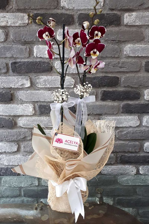 Orkide ve Saksı Çiçekleri