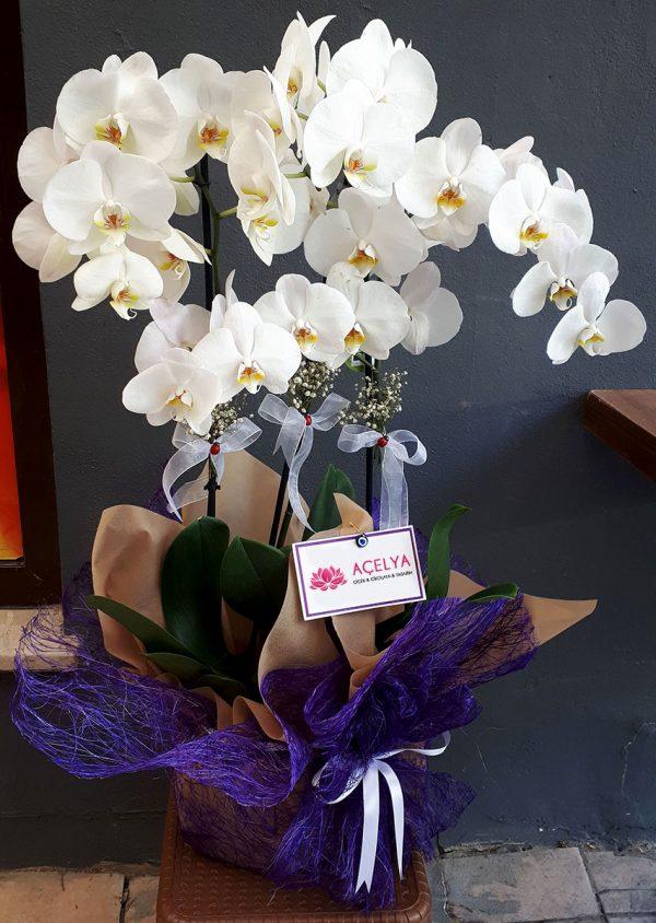 3 Dal Aranjman Orkide
